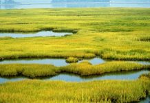 Wetlands protection needed for clean water rights
